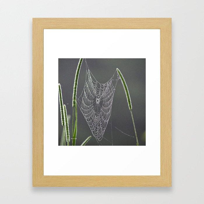 Dewy Web Framed Art Print