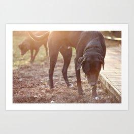 Dogs and Sun. Art Print