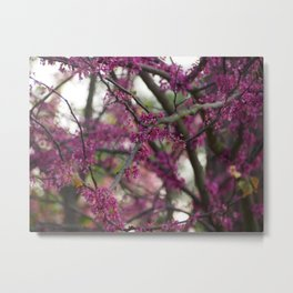 Intersecting Redbud Branches Metal Print