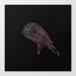 Geographer Cone Snail Canvas Print