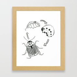 Insect Coloring Book Series - Dreaded Potato Beetle Framed Art Print