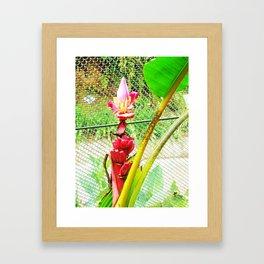 Tropical Petals Framed Art Print