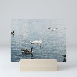 Swan Mini Art Print