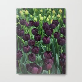 Tulips 02 Metal Print