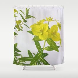 Euphorbia Cornigera Shower Curtain