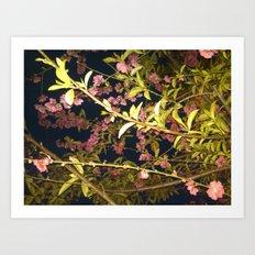 Flowers in the Sky 1 Art Print