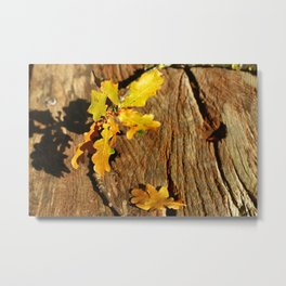 Natures Design Metal Print
