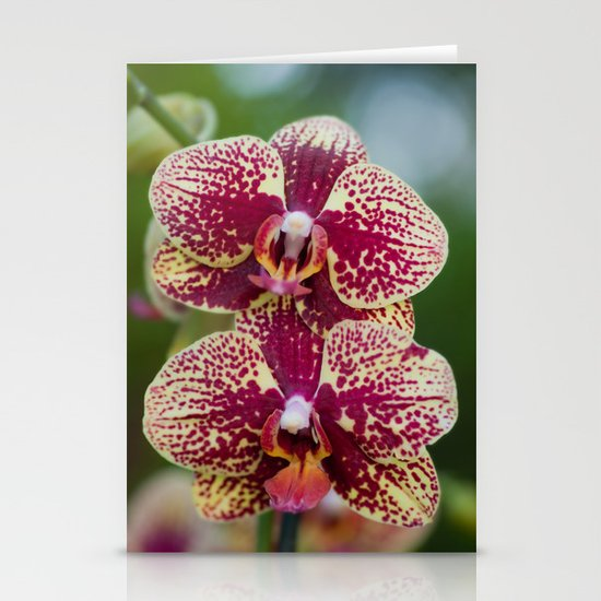 Orchid Phalaenopsis 7989 Stationery Cards