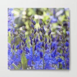 Starry Blue Metal Print