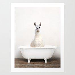 llama Bath (c) Art Print