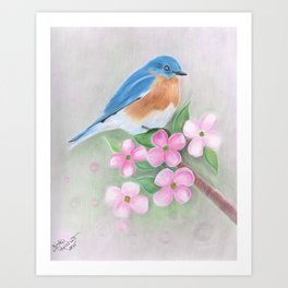 blue bird and dogwood Art Print