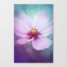 BEAUTY OF THE FOREST - PINK COSMEA FLOWER Canvas Print