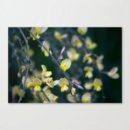Yellow Blur Canvas Print