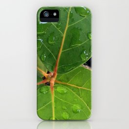 Raindrops on Baby Sea Grape Leaves iPhone Case