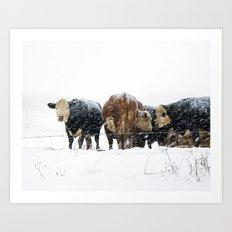 Cattle in a Snowstorm in SouthWest Michigan Art Print