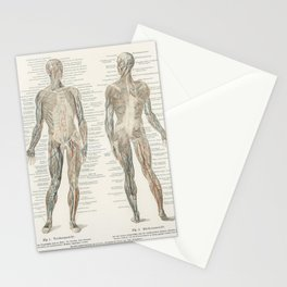 An antique lithograph of the human musculature system from the encyclopedia Meyers Konversations Lexikon (1894) Stationery Cards