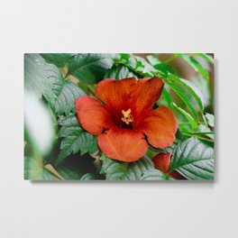 (There is) Something about nature lol Metal Print