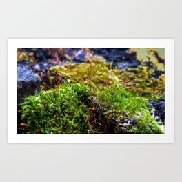 December in Hayman Art Print