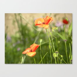 Little Wild Flowers  Canvas Print