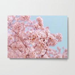 Cherry Blossom Japan Tokyo Metal Print
