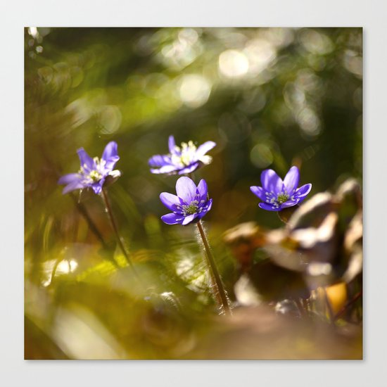 Beautiful Surprise In Spring Forest Canvas Print
