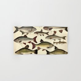 Vintage Illustration of Various Fishes (1902) Hand & Bath Towel