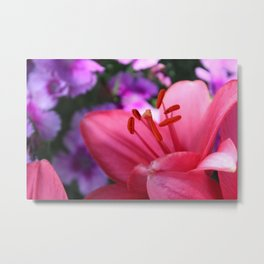 Pink Lilly ll Metal Print