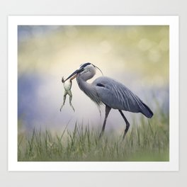 Great Blue Heron with a Bull Frog in its Beak Art Print