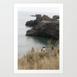 Puffin Along the Cliffs in Iceland Art Print