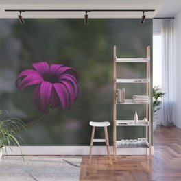 Has been a long day (African Daisy Flower) Wall Mural