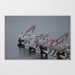 Pelicans of Meningie Canvas Print