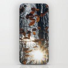 Fall Light iPhone & iPod Skin