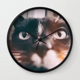 photo cat Jagoda #photo #cat Wall Clock