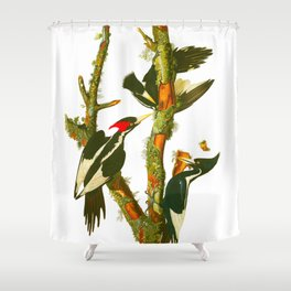 Ivory-billed Woodpecker Shower Curtain