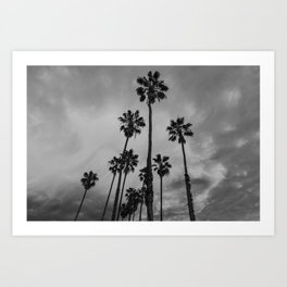 Black and White Los Angeles Palms Art Print