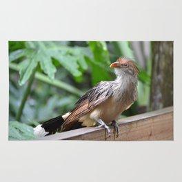 guira cuckoo Rug