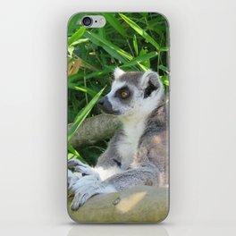 Cute and relaxed Ring-tailed lemur (lemur catta) iPhone Skin