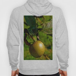 hanging apple Hoody
