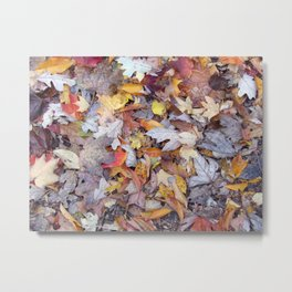 leaf litter menagerie Metal Print