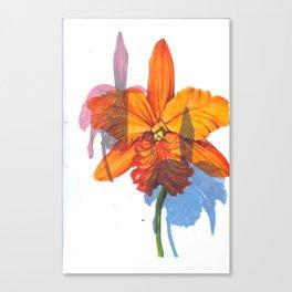 Orchids. Canvas Print