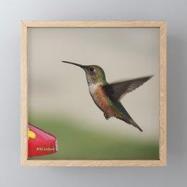 Ms. Hummingbird Checks the Feeder Framed Mini Art Print
