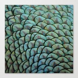 Beautiful Elegant Peacock Feathers Canvas Print