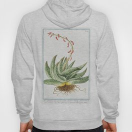 Spineless African Aloe (ca 1772 -1793) by Giorgio Bonelli Hoody