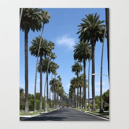 Tall California Palm Trees Photograph Canvas Print