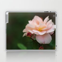 Creme Color Rose with Red Buds Laptop & iPad Skin