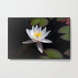 The white nymphaea Metal Print