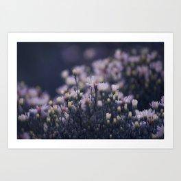 Dreamy daisies Art Print