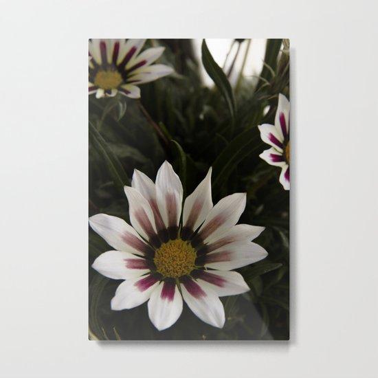 Flowers in summer Metal Print
