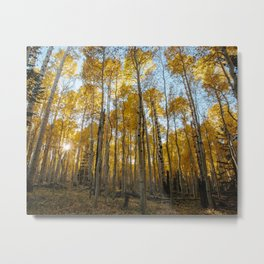 Fall In The Aspens Metal Print