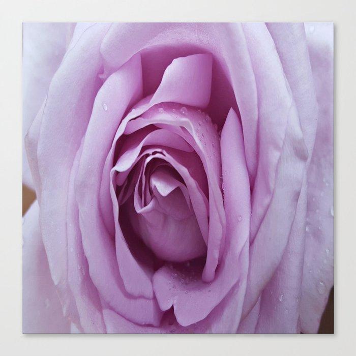 Pale Purple Rose Canvas Print